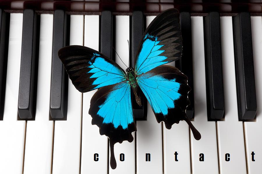 blue-butterfly-on-piano-keys-garry-gay